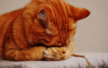 What is separation anxiety and how can your pet manifest it