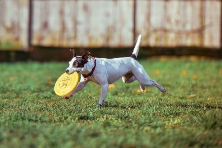 tips and tricks to help your pet cope when you return to work