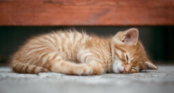 normal for kittens to sleep about 15 to 20 hours a day