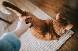 Read your cat's body language