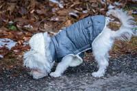 pet winter coat